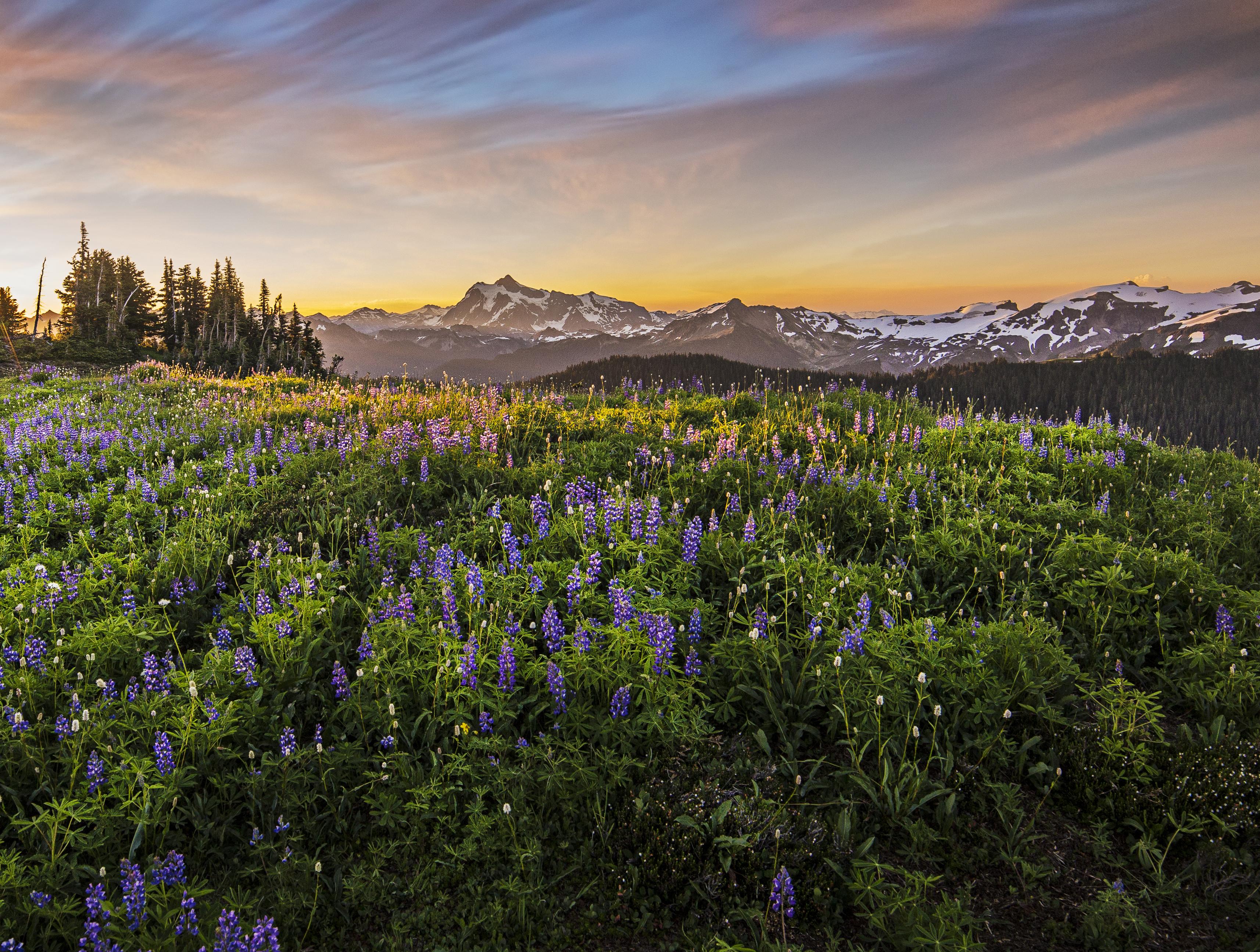 Sepetmber - Mount Shuksan from Skyline Divide