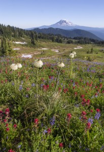 Mount Adams and Wildflowers