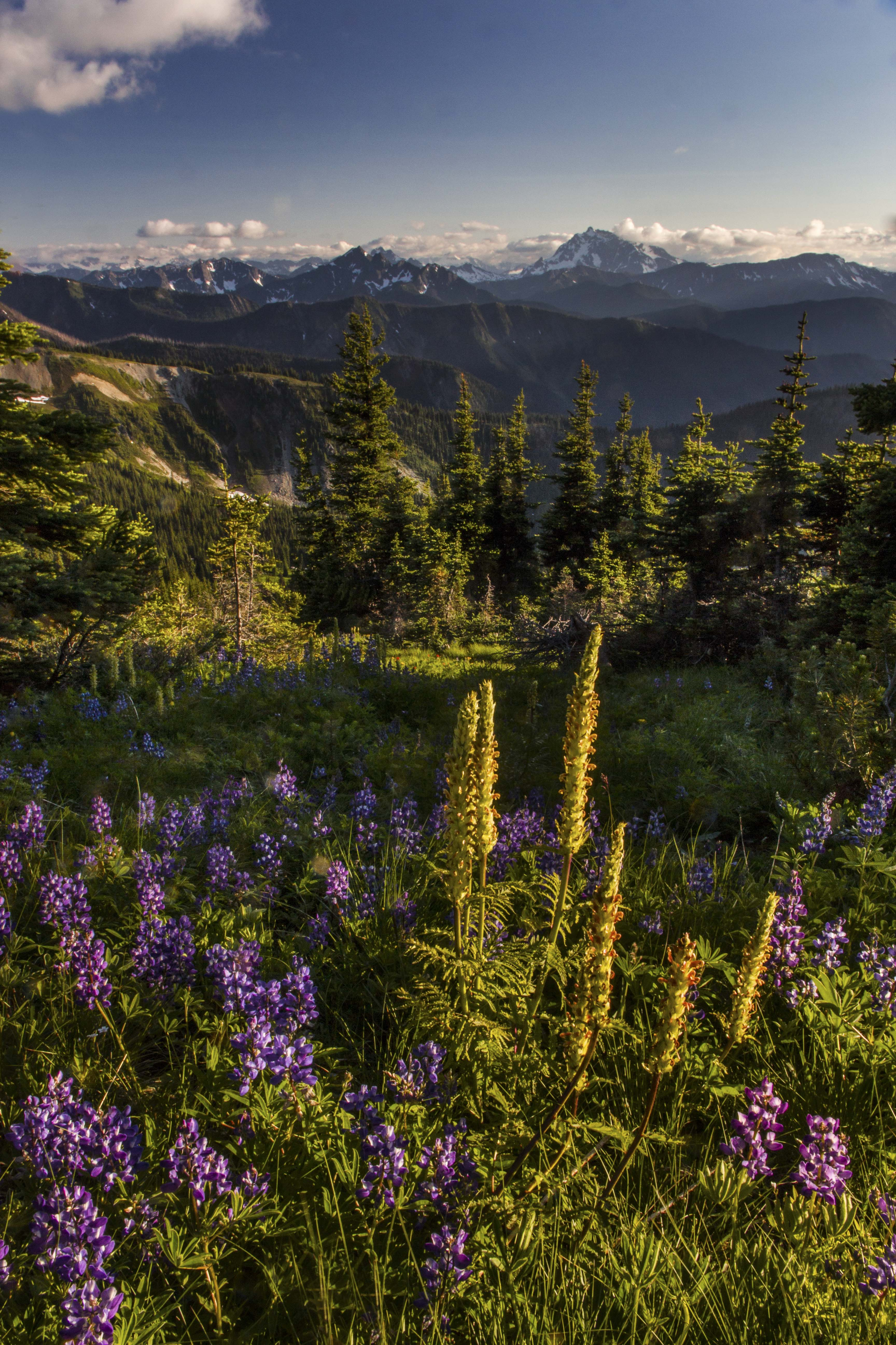 Pasayten Wilderness Andy Porter Images