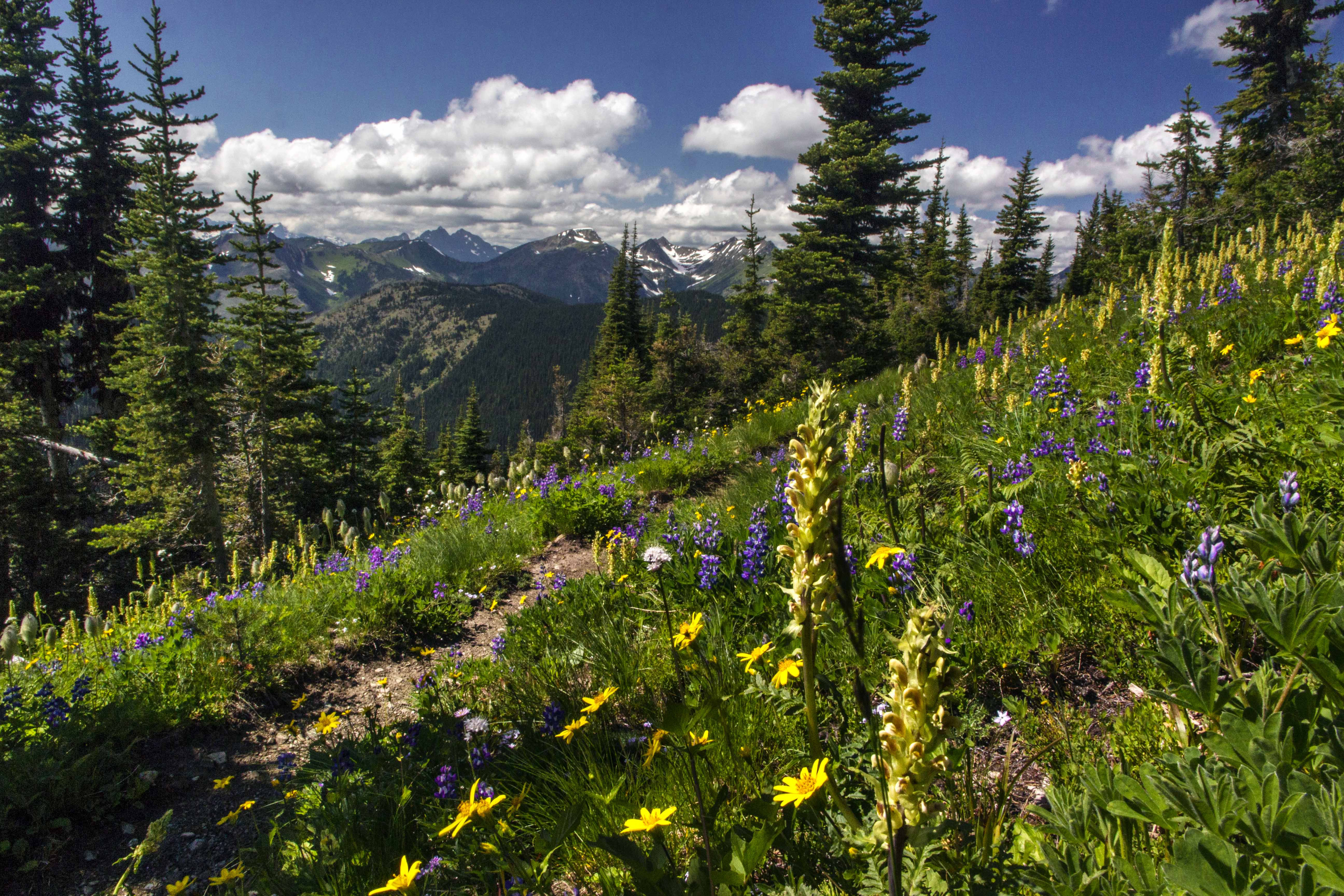 Pacific Crest Trail North Western Images Photos By