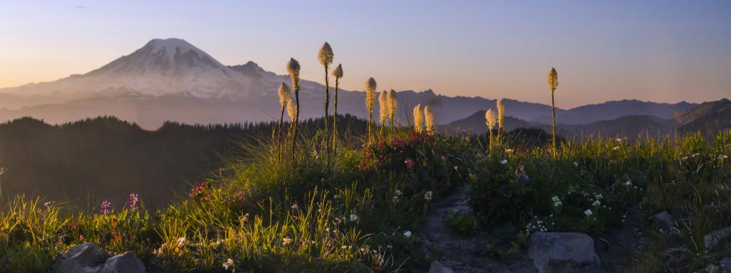 Mount Rainier and Snow Grass