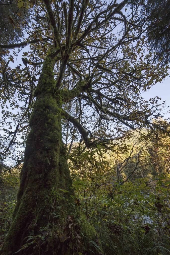 Baker River Trail